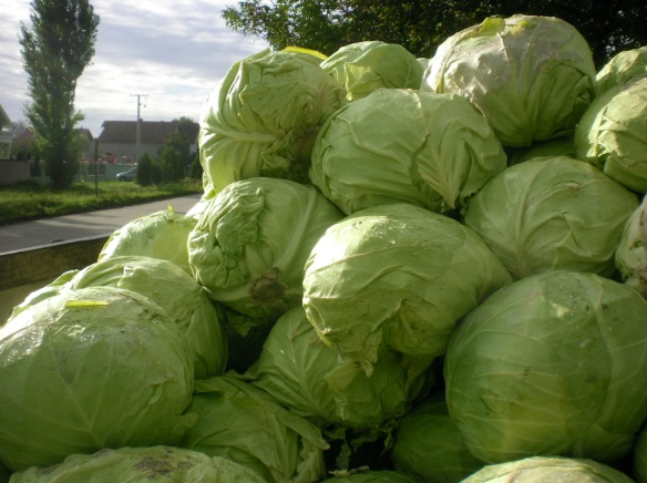A cartload of Cabbage en-route to Belgrade