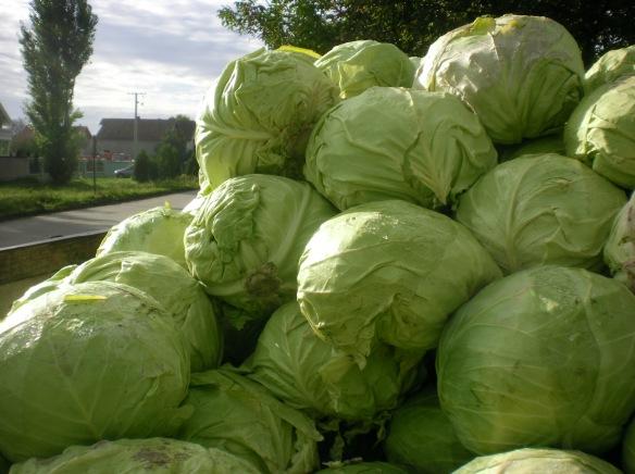 A cartload of Cabbage en-route to Belgrade