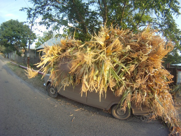 Georgian country car overloaded with fresh harvested corn