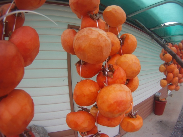 Skinned persimmons drying in the sun, these decorated the front porches of many houses in the interior