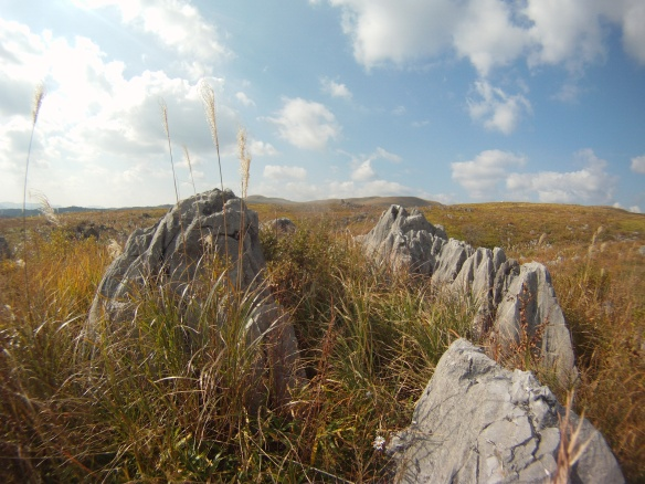 Limestone plains of Akiyoshidai