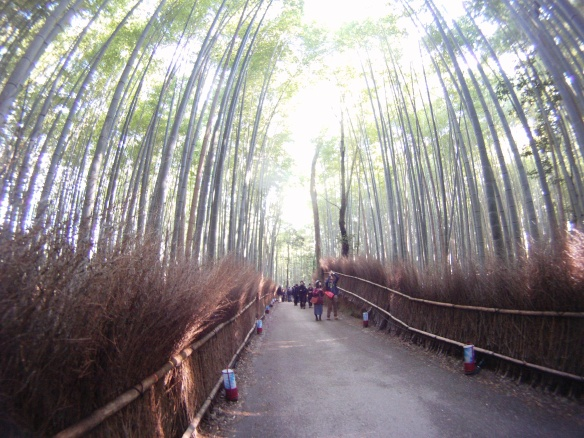 Bamboo forest in Arashiyama Kyoto