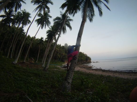 Barangay official free climbs tree to get me a fresh coconut