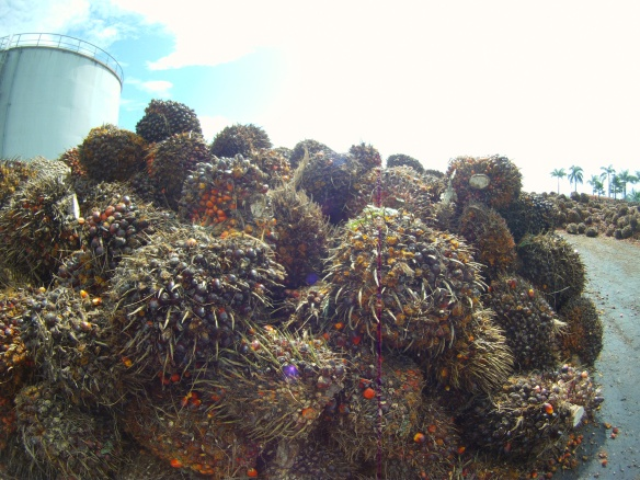 "Stack of roadside ""sawit""   (Saw-wheat) Fruit of the African oil palm, waiting to be processed into oil"