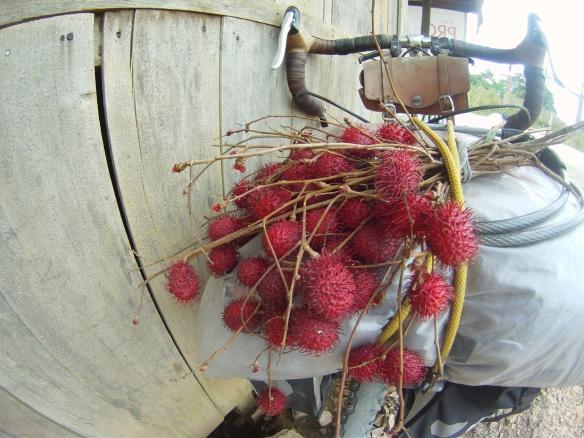 A bouquet of Rambutan, a sweet lychee like fruit