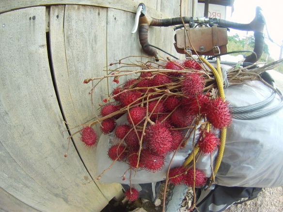 A bouquet of Rambutan, a sweet lychee like fruit