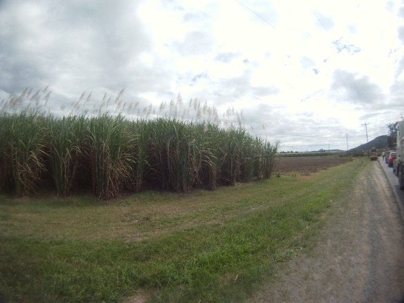 Miles of cane fields eventually gave way to the forest.