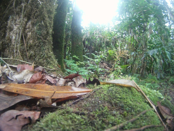 The debris collected at the bottom of the canopy. Mossman Gorge