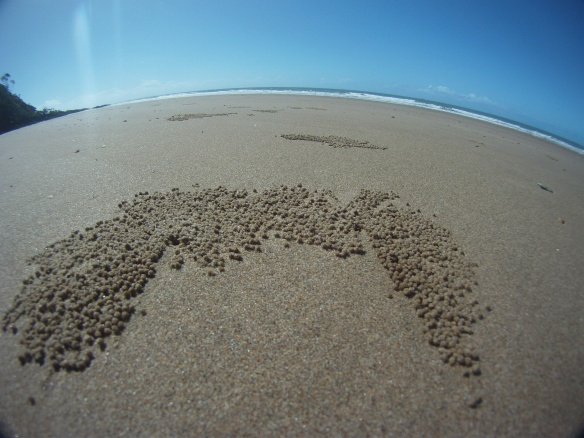 Debris left on the beaches from Bubbler sand crabs